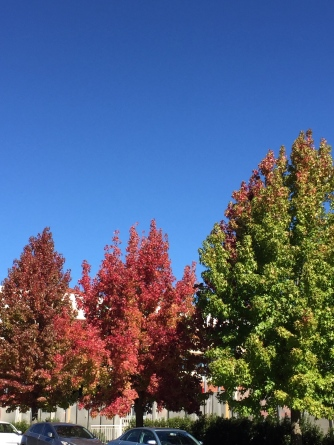 Autumn leaves against a clear blue sky never fails to impress