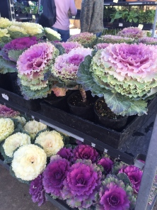 Stunning cabbage flowers at south side farmers' market