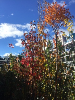 Autumn Dreams at Bunnings!