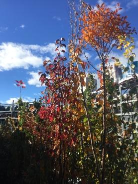 Autumn Dreams at Bunnings!