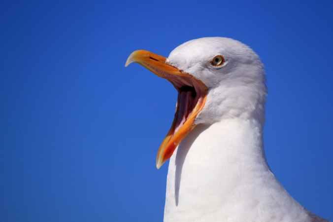 seagull-sky-holiday-bird-56618.jpeg