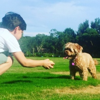 And a plucky cavoodle called Sophie at the dog park near Batgran's place in Sydney